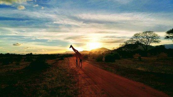 In2kenya: tramonto tsavo east