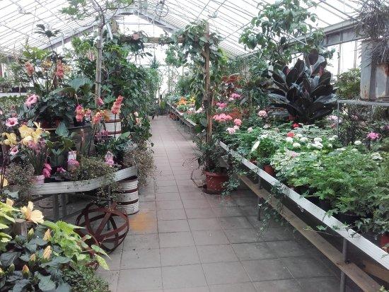 Bilder på Växthuscafeet – Bilder på Ösmo - Tripadvisor