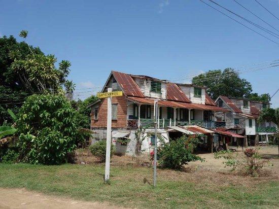Verbazingwekkend Huizen langs de weg - Foto van Fietsen in Suriname, Paramaribo IT-45