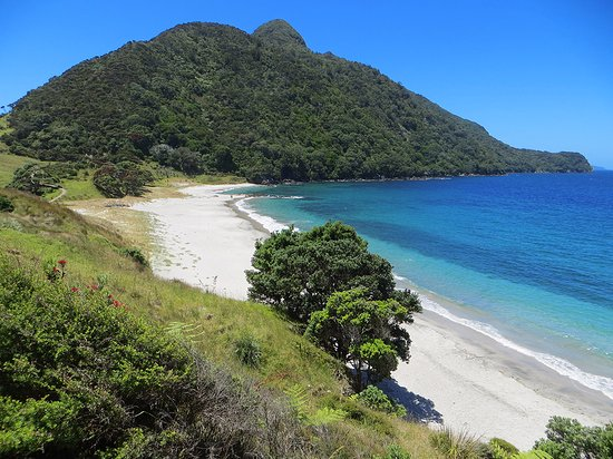 Whangarei Heads, New Zealand: The beach at Smugglers Cove