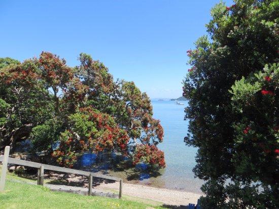 Whangarei Heads, New Zealand: Pohutukawa blossom at Urquharts Bay