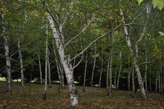 The Birches Luxury Spa Chalets: The enchanting forest of Russian birches