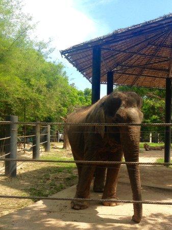 Tha Yang, Tailandia: Just magic