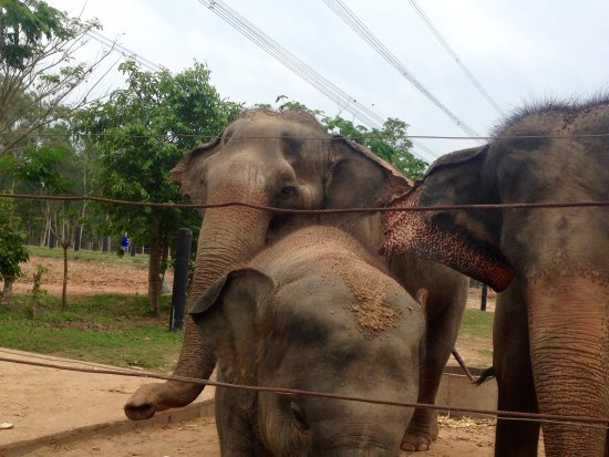 Tha Yang, Thailand: 18 elephants to see