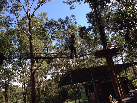 TreeTop Adventure Park Newcastle: photo1.jpg