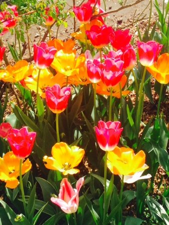 Dorney Self Catering Apartments : A sample of the vibrant garden flowers