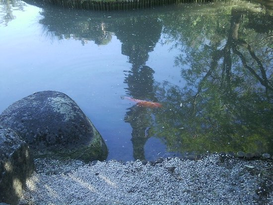 jardin japonais photo