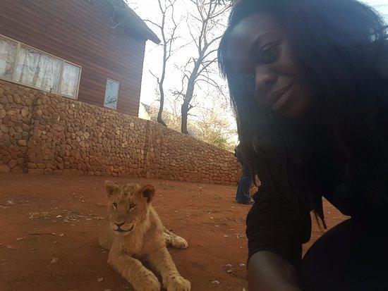 Brits, Südafrika: cub interaction