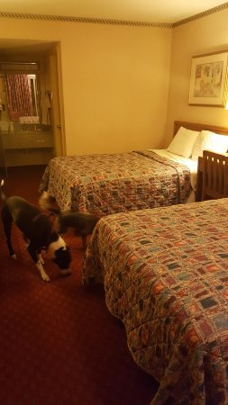 Days Inn by Wyndham Lexington: View from Inside Room