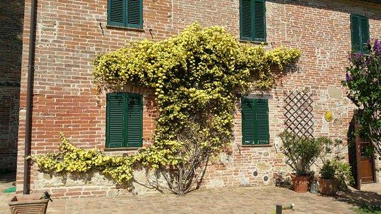 Vaiano, Italien: I colori della primavera con fiori e piante a Torre di tabacco