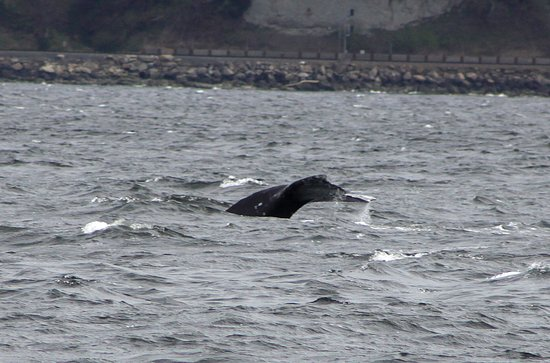 Puget Sound Express - Day Trips: A tail of a whale. Photo is the property of Lee Sprecace Clark