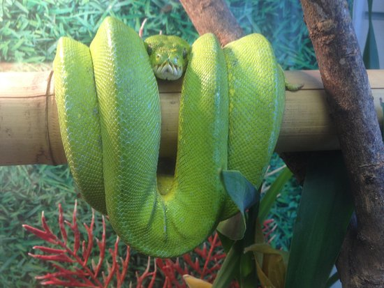 Reptile Mania