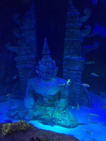 Lido di Jesolo Sea Life Aquarium: photo0.jpg