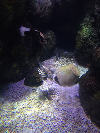 Lido di Jesolo Sea Life Aquarium: photo1.jpg