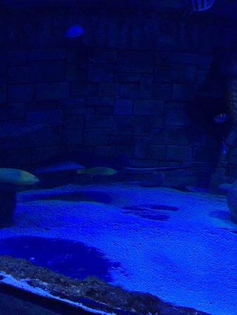 Lido di Jesolo Sea Life Aquarium: photo2.jpg