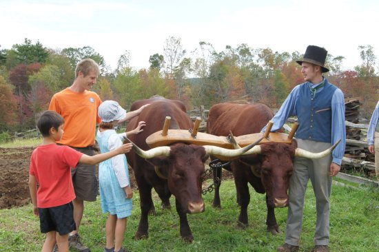 Old Sturbridge Village: Meeting the oxen