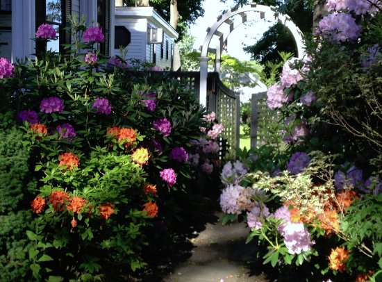The Inn at Bath: Rhododendron, Azalea and Mountain Laurel, oh my!