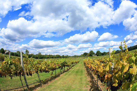 4JG's Orchards & Vineyards