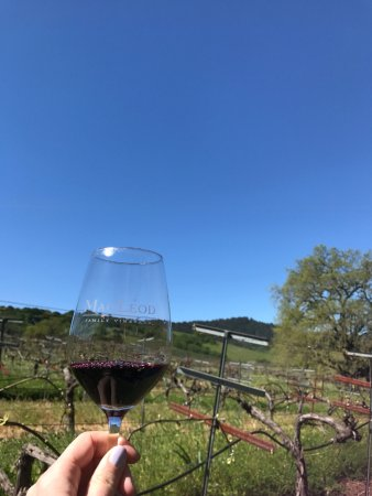 Kenwood, Californie : Merlot in the vineyards