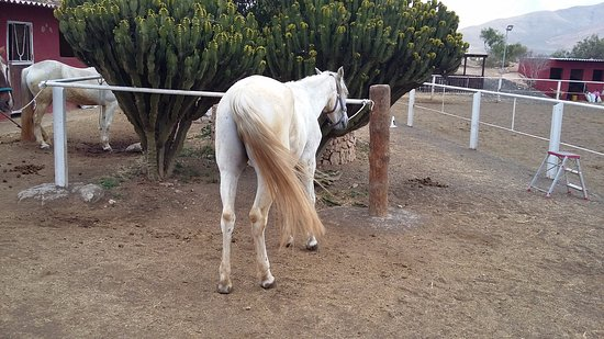 Triquivijate, Испания: Esperando por la excursión a caballo.
