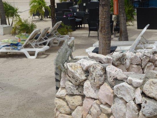 Plaza Resort Bonaire: Aan de bar zie je soms rare beestjes