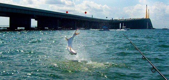 เบรเดนตัน, ฟลอริด้า: Tarpon Fishing in Tampa Bay near the Iconic Skyway bridge