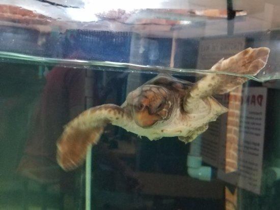 Georgia Sea Turtle Center: 20170405_131351_large.jpg