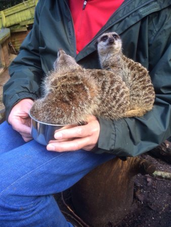 Shaldon Wildlife Trust: Lemur and meerkat experience, up close and personal