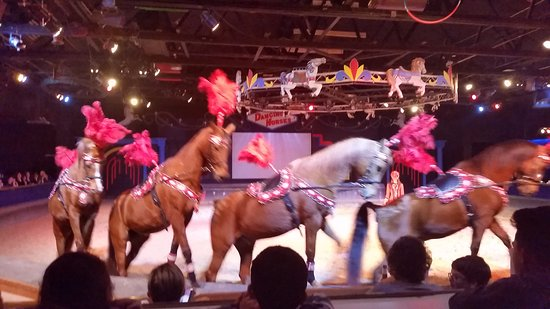 The Dancing Horses Theatre: Finale, great show!