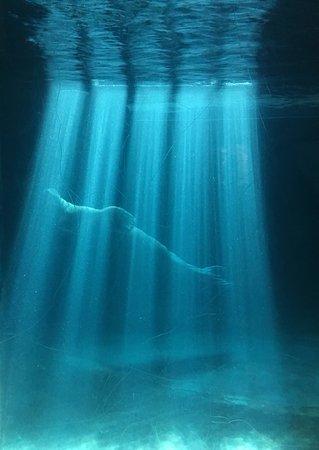 oceanogrfic photojpg