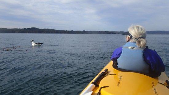 Stewart Island, นิวซีแลนด์: Hello Mr. Albatross!