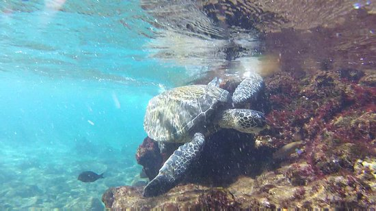 Black Rock: turtle and fish just offshore in shallow waters