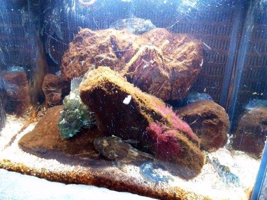 Photo de nausica centre national de la mer for Mini poisson aquarium