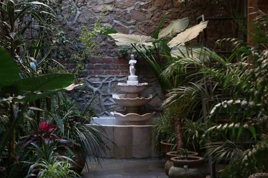 El patio 77, first eco-friendly B&B in Mexico City: El patio de PATIO 77