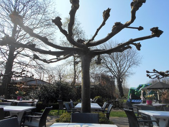 Groet, The Netherlands: teras