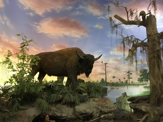 South Florida Museum and Bishop Planetarium : Bison Scene
