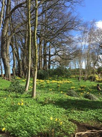 Guisborough Priory: photo0.jpg