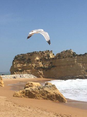 Praia Dona Ana: photo0.jpg