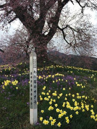 Nirasaki, Japan: photo1.jpg