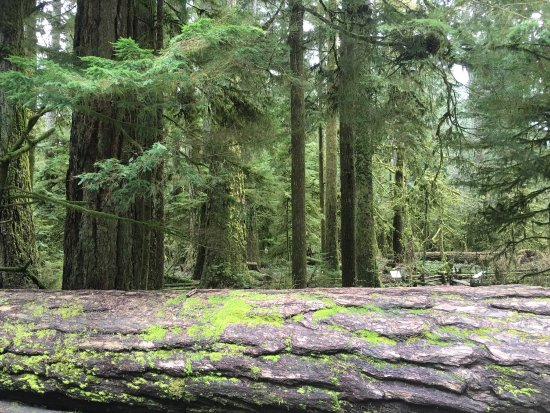Port Alberni, Kanada: An amazing place to think some of those trees are in excess of 850 years old. Makes you realise