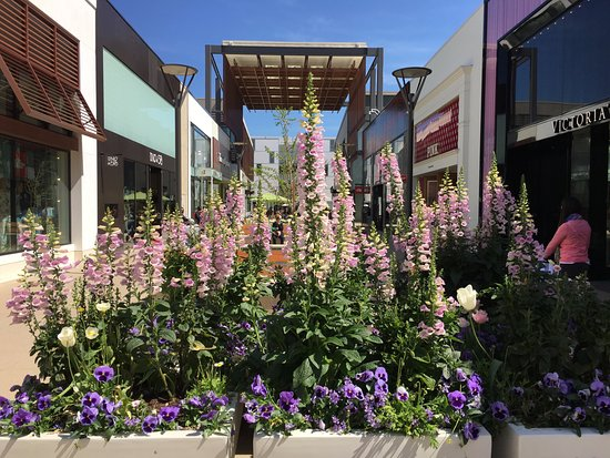 The Stanford Shopping Center: Lovely flowers everywhere
