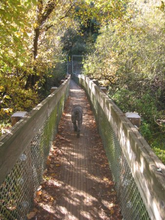 Castro Valley, CA: Foot bridge between the LIve Oak Trail and Cameron Loop