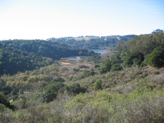 Overlooking Lake Chabot from the Brandon Trail