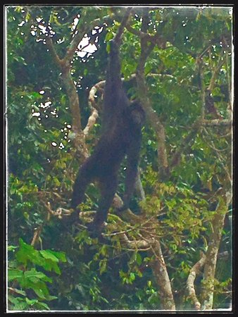 Embera Tours Panama : Monkeys flying through the trees on our journey~!