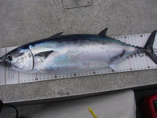 Chaitén, Chile: Pacific Bluefin tuna
