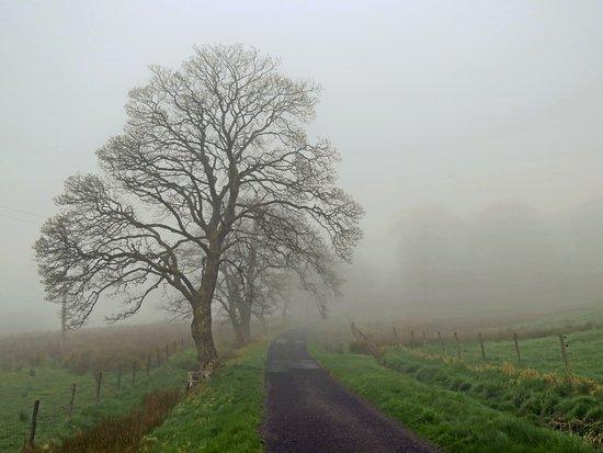 Drum Farm : the laneway