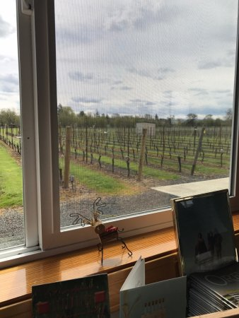 Independence, OR: Springtime Window View Redgate Vineyard