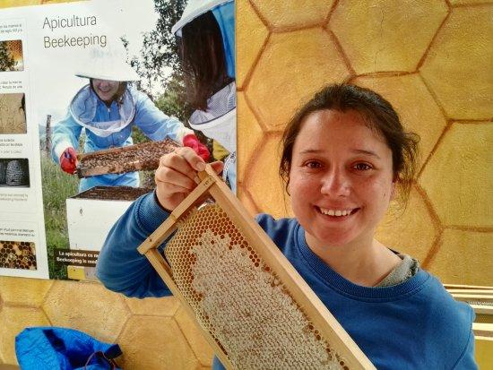 Machachi, Ecuador: La miel más pura del mundo :D