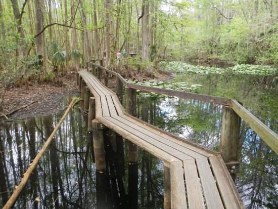 Sebring, FL: The boardwalk took us through the swamp high and dry.