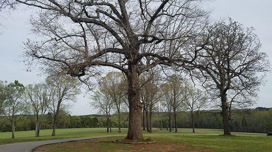 Virginia International Raceway: The Oak Tree Tavern at VIR, a converted plantation estate, still has many ancient oaks.